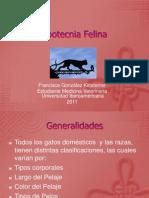 Zootecnia Felina