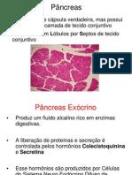 seminário pancreas