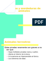 31 Picadas y Mordeduras de Animales