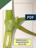 3. Morfologia y Organografia de La Vid