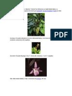 Etimologia de Las Orquideas