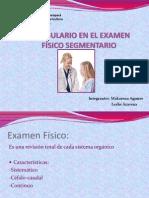 VOCABULARIO EN EL EXAMEN FÍSICO SEGMENTARIO