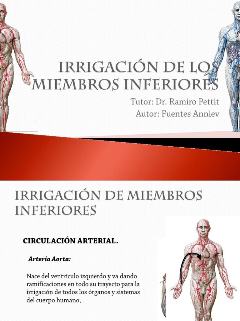 Lujo Anatomía Vascular De Miembros Inferiores Friso - Imágenes de ...