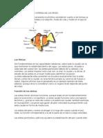 Anatomia Externa e Interna de Los Peces