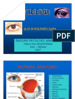 Sss155 Slide Eyeocular Adnexa