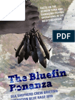 Bluefin Bonanza