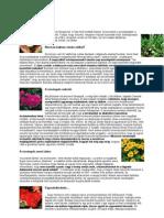 Érző növények - The secret life of plants