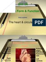 8. Unit 2A Heart Circulation