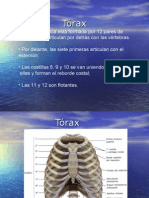 Tòrax