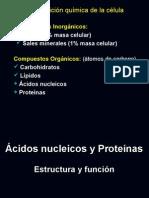 Acidos_nucleicos_2008