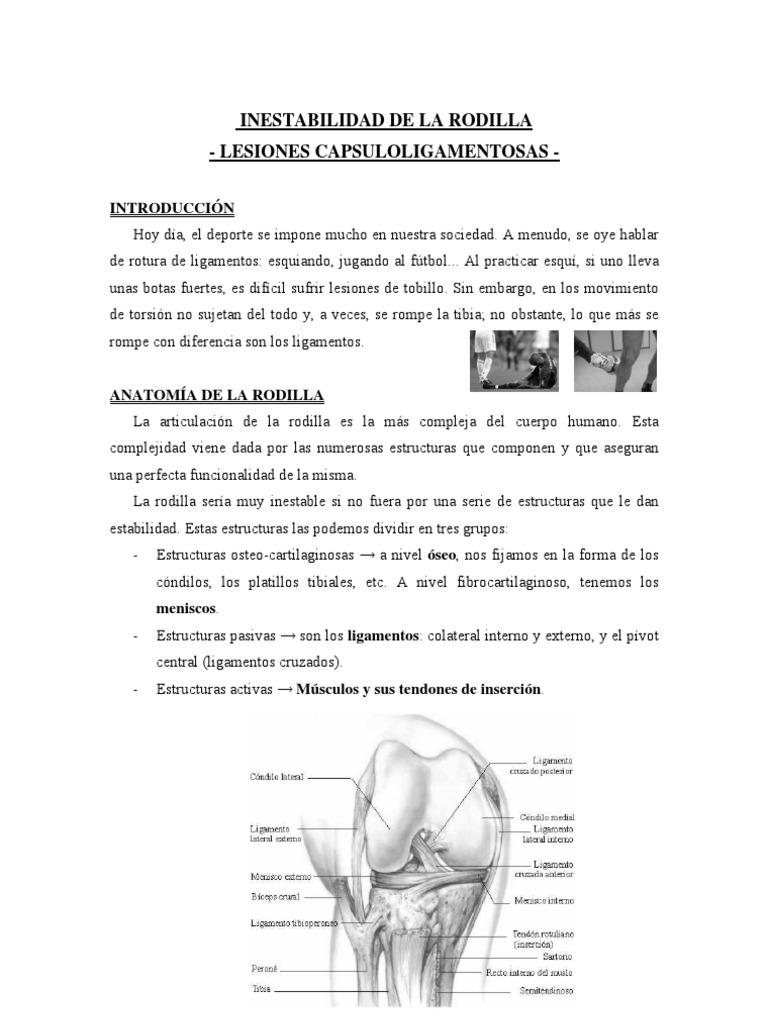 Asombroso Ligamentos Y Tendones Anatomía De La Rodilla Ilustración ...