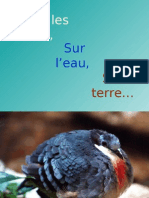Oiseaux Diapos