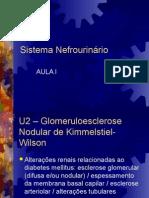 SNU1-Sistema Nefrourinário Prática I