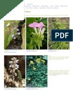 Günther's Site - Photos of European Plants