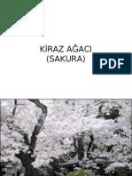 KIRAZAGACI