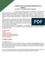 CARACTERÍSTICAS GENERALES DE LAS REGIONES CORPORALES EN EL CABALLO. negro