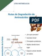 05_Rutas_de_Degradacion_de_Aminoacidos (1)