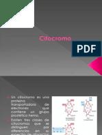 citocromo (2)