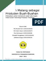 Malang Sebagai Wilayah Produsen Buah-buahan_pitty