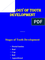 Histology of Tooth Development