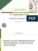 17-pares-craneales-1201130538583042-4-110507230416-phpapp02