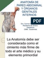 Anatoma Pelvica Genital Feminino