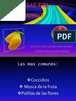 Exp. Plagas Del Mango