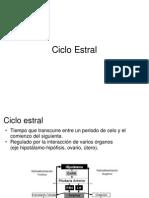 Ciclo_Estral