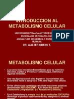 Bioquio Clase i Estomat.ok Metabolismo Celular