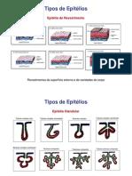 Aula Epitelio Glandular 09[1]