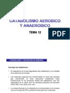 Fases y tipos de metabolismo.pdf