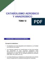 CATABOLISMO (aerobio y anaerobio)