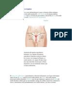 Cancer de Cuello Uterino2