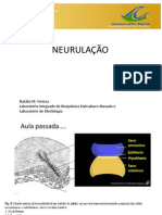 Biologia-NeurulaçaoSomitogenese