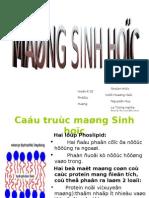 Mang Sinh Hoc