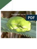 Fauna Otamendi