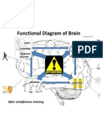 Brain Function Diagram - AFTER Mindfulness Training