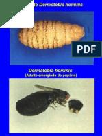 Parasitologia - Díptera, ptera Siphon Apt Era, a Anoplura