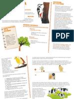 EPO-desarrolloActividad