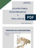 Cingulo Pectoral 2011