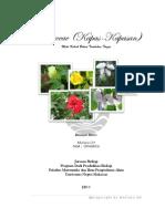 Malvaceae Muliana GH