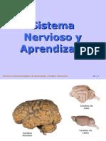 Sistema Nervioso y Aprendizaje i 5343