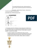 Sistema Esqueletomasoquisoideitis Jr de Leo Por Ardillitasjrjrjr Auto Guard Ado)