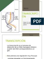TRANSCRIPCION2