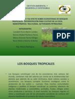 DEFORESTACION-BOSQUES TROPICALES
