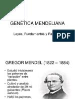 3.+Genéti..