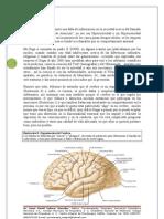 Manual TDA, Dr. Salazar