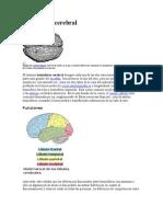 Hemisferio Cerebral (1)