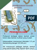 Dasar-dasar Perlindungan Tanaman (Bakteri)