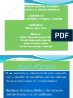 CONDROSTEO 1B
